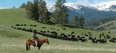 i love this pic its not our ranch...but i wish it was running cattle on horse back ...beautiful