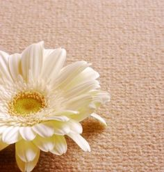 Nature's Carpet: Warm, Fuzzy…Sustainable | Eco-Friendly for your Green Home | Organic Spa Magazine