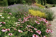 Combinations with white and pink Echinacea