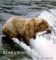 Alaska Fishing Lodges and World Famous Bear Viewing - Katmailand and Angler's Paradise Lodges. The World Famous bear viewing at Brooks Falls is only a short walk from Katmailand's Brooks Lodge. As many as fifty bears can be viewed fishing along the mile and a half long Brooks River during the peak of the salmon season. Many visitors see bears within minutes of arrival.