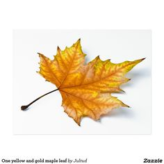 One yellow and gold maple leaf postcard