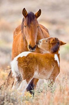 Tenderness.  A Mare and her foal