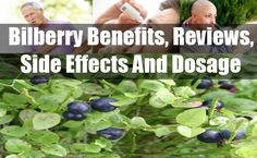 Bilberry Benefits, Reviews, Side Effects And Dosage