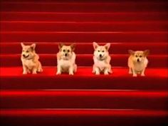 Corgis Singing Happy Birthday (Sir Ver.) - YouTube
