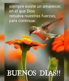 Good Morning Rainy Day, Good Morning Funny, Good Morning World, Good Morning Messages, Good Morning Quotes, Cute Spanish Quotes, Rainy Day Quotes, Bird Quotes, Positive Phrases