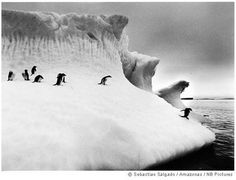Genesis is Epic Eco-Photography by Sebastiao Salgado : TreeHugger