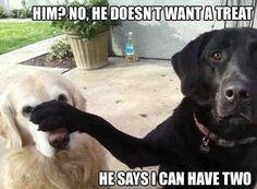 haha funny dogs