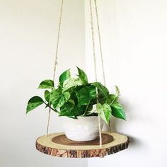 Wood slab slice floating hanging planter shelf table is part of Diy wood shelves This wood shelf suspends from the ceiling and gives any room a clean minimalist touch I like using it as a planter s - Diy Wood Shelves, Plant Shelves, Window Shelf For Plants, Hanging Wood Shelves, House Plants Decor, Plant Decor, Bedroom Plants Decor, Deco Nature, Decoration Plante