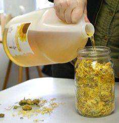 Calendula Infused Oil Tutorial   Aromatic Wisdom Institute Essential Oil Education Aromatherapy Certification Liz Fulcher