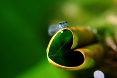 <b>Mother Nature leaves love notes everywhere.</b> Maybe you haven't seen them yet?