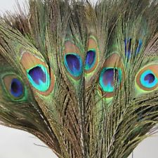 Gift Pack of 50pc Natural Peacock Feathers 10-12'' SC£2.56
