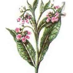 Ce este reumatismul si cum il poti trata in mod natural- partea a II-a - Infuzie de Sănătate Garden Trees, Medical, Plants, Shake, Health, Remedies, Gardens, Fashion, Moda