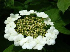 Wer kennt diese Blüte... von dor.maX