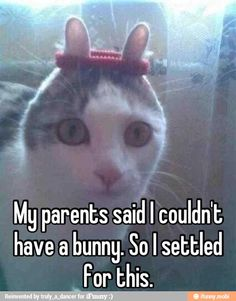 My parent said I couldn't have a bunny... / iFunny :)