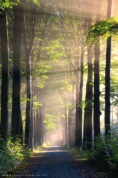 Light flooding the woods
