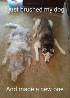 Funny Animal Memes Of The Day – 52 Pics - Lovely Animals World 32 Funny Animals Guaranteed to Make You Laugh This dog got tricked LOL 24 Funny Animal Pictures Of The Da. Cute Animal Memes, Funny Animal Quotes, Animal Jokes, Funny Animal Pictures, Cute Funny Animals, Cute Baby Animals, Funny Cute, Dog Quotes, Fluffy Animals