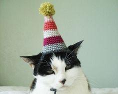 Birthday cat.