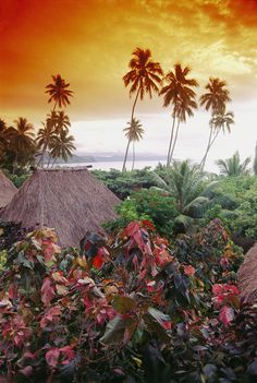 Fiji, Kadavu Island  I want to travel all around the pacific islands... taking lots of time to explore remote areas!