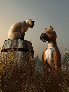 """Official Title: """"The Peace Accord""""     A dog and a cat confer in a field at dawn. Naturally the cat demanded that he sit higher than the dog before he would show up. Just a simple image I there together as an afternoon doodle."""