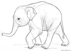 How to draw a baby elephant | Step by step Drawing tutorials