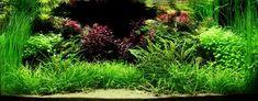 Layout 82 - Dan Crawford, Paulo Leal, Tony Swinney - Tropica Aquarium Plants