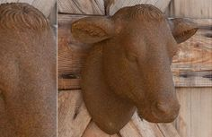 Yearling Heifer Head | Cow Head Wall Mount | Mounted Cow Head www.decorsteals.com