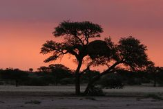 Namibia. BelAfrique your personal travel planner - www.BelAfrique.com