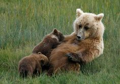 #Bear #Mother #Love
