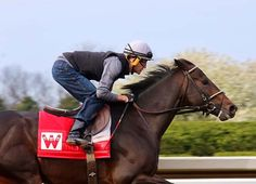 Whitham Thoroughbreds' McCraken (Ghostzapper) tuned up for Saturday's GII Toyota Blue Grass S. with a half-mile work in :49.40 (14/34) (video) at Keeneland Sunday. With jockey Brian Hernandez, Jr. in the irons, the unbeaten 'TDN …