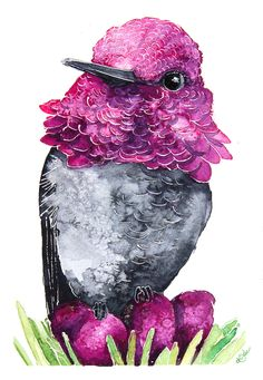 Hummingbirds watercolours illustrations