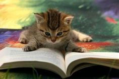 What better way to spend the afternoon? Kittens, books, and coffee.