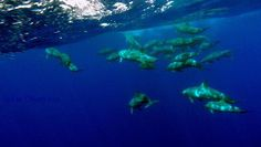 Matavai Resort Niue Island - Niue The Beautiful South, Whale Watching, South Pacific, Deep Sea, Hotel Reviews, New Zealand, Trip Advisor, Australia, Dreams