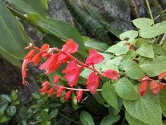 Mais flores no Jardim