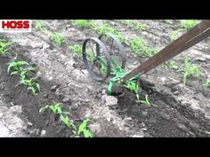 Hilling your corn when it's small can go a long way to prevent wind damage in the future. The Double Wheel Hoe with Plow Set attachments is the perfect tool ...