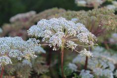 Camilla Hiley - Garden and Landscape Designer - Salisbury, Wiltshire UK Landscape Design, Flora, Autumn, Bed, Nature, Plants, Garten, Fall, Stream Bed