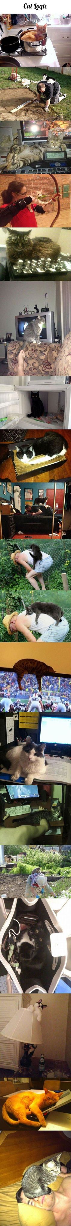 Cat Logic cute animals cat cats adorable animal kittens pets kitten funny pictures funny animals funny cats