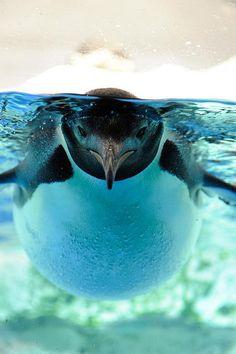 pascal leroi: Hi, Mr Pinguin #Lockerz