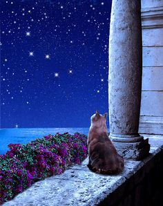 Kitty staring at twinkling stars in Cassiopeia Digital Art - by Kathleen Horner Siamese Cats, Cats And Kittens, I Love Cats, Cute Cats, Animals And Pets, Cute Animals, Constellation Art, Cat Watch, Beautiful Cats