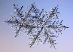 double fernlike stellar dendrite snowflakes