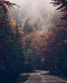 26 Best ideas for nature landscape photography beautiful places Beautiful World, Beautiful Places, Beautiful Pictures, Trees Beautiful, Beautiful Forest, Pretty Photos, Autumn Aesthetic, Nature Aesthetic, Adventure Is Out There