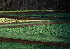 Ground Textures: Terraced ground designed by Andrea Cochran
