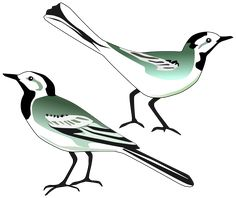 White Wagtail by @pesasa, White Wagtail drawn after http://commons.wikimedia.org/wiki/File:White_wagtail.jpg, on @openclipart
