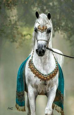 At ve Cirit Beautiful Arabian Horses, Most Beautiful Horses, Majestic Horse, Pretty Horses, Horse Love, Beautiful Creatures, Animals Beautiful, Cute Animals, Horse Photos