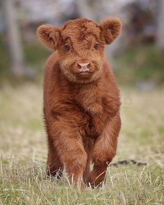 Cute Baby Animals Desktop Wallpaper their Cute Little Animals Drawing, Cute Animals Name many Cute Animals Pictures In Hd into Cute Animals To Draw Easy Pet Cows, Baby Cows, Baby Donkey, Baby Elephants, Cute Little Animals, Cute Funny Animals, Funny Cats, Farm Animals, Animals And Pets