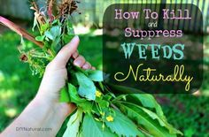 How to kill and suppress weeds naturally