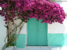 Bougainvillea was taken in Greece, Naxos
