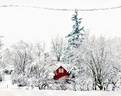 Holy moly this is pretty. Snowed In by Darrell Wyatt, via Flickr