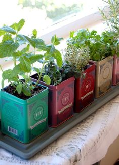 cute idea :: Herb Garden in Tea Tins. (great little tutorial) Good idea for small apartment spaces. cute idea :: Herb Garden in Tea Tins. (great little tutorial) Good idea for small apartment spaces. Herb Garden In Kitchen, Kitchen Herbs, Herbs Garden, Window Seal Herb Garden, Window Seal Plants, Garden Shrubs, Easy Garden, Window Herb Gardens, Garden Tips