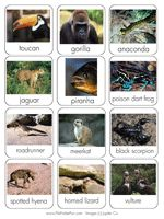 Animal habitats file folder game (great to include in a lapbook too)