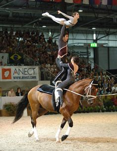 Vaulting horse used in gymnastics you learn